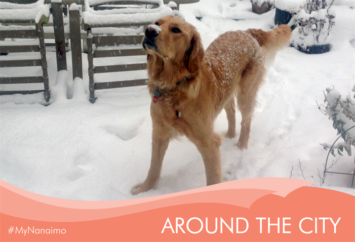 Around the City header image of dog in snow