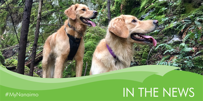 In the News header image of dogs