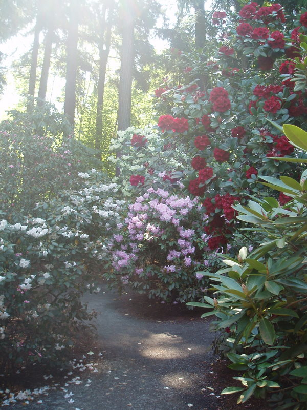 Hailey Rhododendron Grove